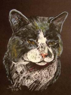 gray cat pst